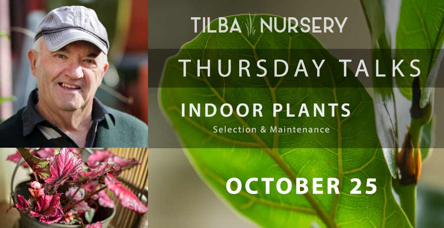 Thursday Talk | October - indoor plants