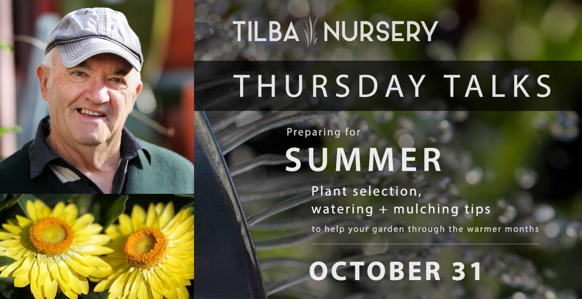 Thursday Talk - October 31