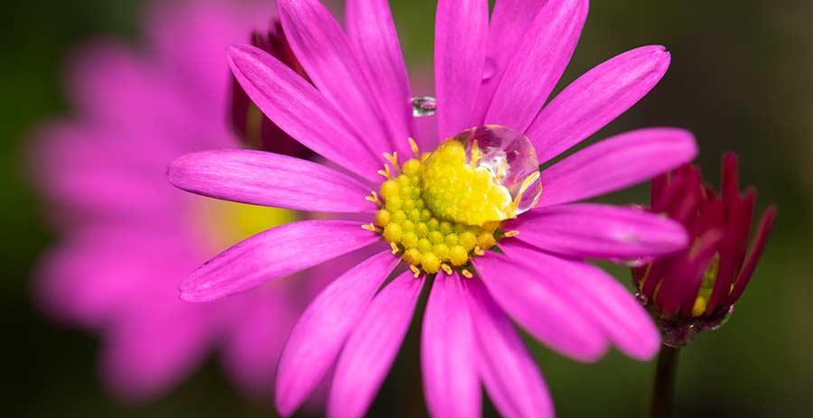 Tilba Nursery - spring colour