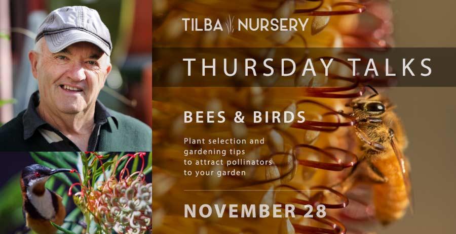Bees and Birds - Thursday Talk
